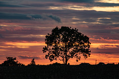 Billinge at sunset (ianbonnell) Tags: billinge sthelens wigan merseyside lancashire