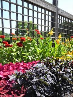 Wheaton, IL, Cantigny Park, Idea Garden, Plants and Flowers