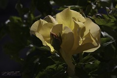 beautiful day to you (zawaski) Tags: zawaski©2018 alberta beauty canada naturallight noflash canmore ambientlight calgary rockymountains love canonefs55250mmf456isstm
