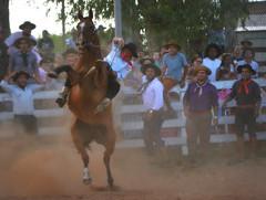 Joaquín Griolio e Arteira (Eduardo Amorim) Tags: gaúcho gaúchos gaucho gauchos cavalos caballos horses chevaux cavalli pferde caballo horse cheval cavallo pferd pampa campanha fronteira quaraí riograndedosul brésil brasil sudamérica südamerika suramérica américadosul southamerica amériquedusud americameridionale américadelsur americadelsud cavalo 馬 حصان 马 лошадь ঘোড়া 말 סוס ม้า häst hest hevonen άλογο brazil eduardoamorim gineteada jineteada