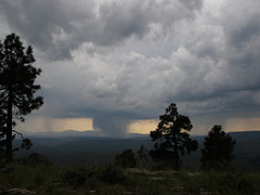 The Arizona Monsoon (zoniedude1) Tags: arizona wild skyscape thearizonamonsoon raindump downpour summerstorms monsoon view mogollonrim pronouncedmuggyown therim landscape mountains stormy weather storms cliffedge forest viewpoint gnarlyskyscape stormyweather monsoon2018 thunderstorms rain 100mileview vista azmonsoon summer sky coloradoplateau 7600ftelevation highcountry outinthewild nature southwest canonpowershotg12 pspx9 zoniedude1 earthnaturelife