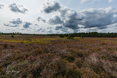 Heather under the clouds (Leo Kramp) Tags: 2018 weer veluwe wandelen heide wolken flickr natuurfotografie bloemen gortel emst gelderland nederland nl leo leokramp wwwleokrampfotografienl leokrampfotografie websitelandschap web netherlands photography events data plaatsen 2010s