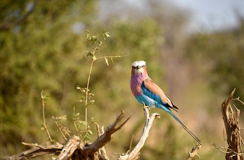 NKB_5182 Bird