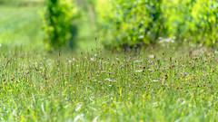 Green 3 (in explore) (Pyc Assaut) Tags: green 3 vert vignes vigne herbe grass couleur colors couleurs pyc5pyc pyc5pycphotography pycassaut pierreyvescugni nature natural naturel explore inexplore