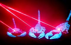 War of the Scorpions - Derek Dewey-Leader (Adaptalux) Tags: macro macrophotography lighting photograph amazingcolour nofilter photooftheday amazing order closeup studio photography professional product adaptalux texture orange green leaf nature creative colour colourful colours scorpion laser uv ultraviolet