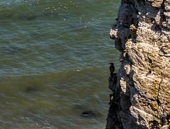 2018-06-30 Flambro-1440835.jpg (Hands in Focus) Tags: flamboroughcliffs lumixfz1000 ocean cliffs eastridingofyorkshire sea