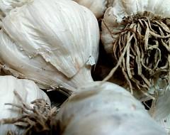 Garlic for Good (Zohaib Usman (1M Thanks)) Tags: drygarlic garlic herbsandvegetables herbs herbsandspices healthyherbs plantsandherbs garliccloseup vegetables dryherbs freshherbs macros macrosandcloseup ngc zohaibusmanphotography poshe550