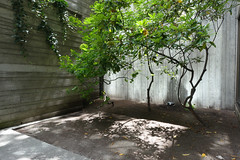 Freeway Park (Blinking Charlie) Tags: freewaypark seattle washingtonstate usa sonydscrx100m3 downtown firsthill brutalistarchitecture concreteformmarks lightandshadow rhododendron halfmoonmaple 2016 rattrap