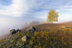 Во поле березка стояла… #maksileni, #Максименко_Леонид, #Leonid_Maksimenko, #природа, #небо, #небоголубое, #сониальфа, #сониа6000, #sonyalpha, #sonya6000, #natgeoru, #natgeorussia, #natgeoyourshot, #своифото, #пейзаж, #природа, #утро, #рассвет, #дерево, # (ЛеонидМаксименко) Tags: сониа6000 maksileni leonidmaksimenko foggy nature natgeoru небо природа натура дерево sun рассвет своифото sunrise natgeorussia сониальфа пейзаж восход sonyalpha утро небоголубое лучи sonya6000 tree landscape natgeoyourshot туман максименколеонид осень золотаяосень autumn