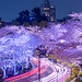 Midtown Sakura Lightup - Tokyo, Japan