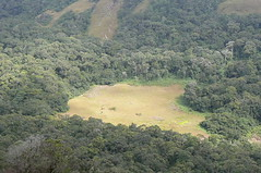 Clearing in Manho forest - Namuli