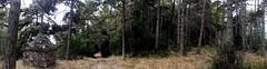 20180819_182354 (leosagnotti) Tags: sentiero bosco pineta
