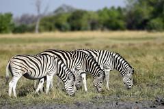 Tony Mobile Safaris (niceholidayphotos) Tags: