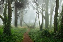 Sintra Dreams IV (J C Mills Photography) Tags: sintra portugal forest woodland mist fog ivy path