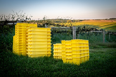 Harvest Time (Phil Roeder) Tags: baldwin jacksoncounty iowa taborhome winery vineyard grapes harvest leicax2 leica