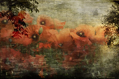 Poppies (fathomsue) Tags: poppies photoshop flowers red layered texture