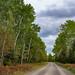 Arrowhead Trail (Highway 16), Cook County, Minnesota
