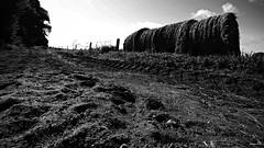 Suivre la voie tracée (Un jour en France) Tags: monochrome bocage paille paysage noiretblanc noiretblancfrance