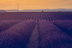 i have nothing (Smo_Q) Tags: provence pentaxk3ii france lavender