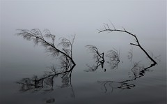 """"""" Reflections """" (gmayster01 on & off ...) Tags: reflections lake summer canoeing cadence reflets water branches photography gmayster guymayerphotography gmayster01 minimalism zen spirituality"""