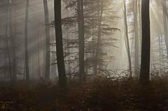 DSC_8716 Eine märchenhafte Atmosphäre zum Träumen... - A fairytale atmosphere to dream ... (baerli08ww) Tags: deutschland germany rheinlandpfalz rhinelandpalatinate westerwald westerforest wald forest baum tree nebel fog mist morgensonne sonne sun morningsun herbst autumn herbstfarben autumncolors sunrise sonnenaufgang sonnenstrahlen sunbeams natur landschaft landscape licht light nikond5100
