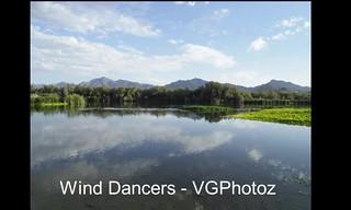 Wind Dancers