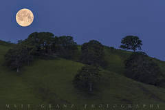 Harvest Moon (Matt Granz Photography) Tags: moon lunar fullmoon twilight night harvestmoon contracostacounty california hills trees grass landscape nature sky darkness concord clayton nikon d750 mattgranzphotography