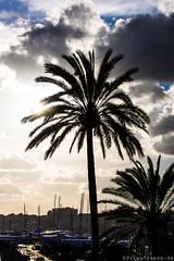 Bewölkt in Palma (Viewfreeze) Tags: mallorca urlaub palma illesbalears spanien es palmen wolken