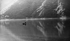 #256 Early morning on the lake (tokyobogue) Tags: 365project japan yamanashi countryside nikon nikond7100 d7100 sigma sigma1750mmexdcoshsm water lake lakesai saiko fujigoko fujifivelakes mountains dawn morning forest fishing boat reflections angler