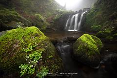 Las condiciones perfectas. (Fotografias Unai Larraya) Tags: paisajes naturaleza río cascadas largaexposición musgo arboles nieblas ngc gorbea piedra bosque