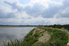 IMG_6142 (mohandep) Tags: hessarghatta lakes karnataka butterflies birding nature wildlife insects signs food