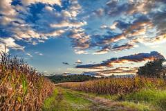 IMG_5118tzl1scTBbLGERk (ultravivid imaging) Tags: ultravividimaging ultra vivid imaging ultravivid colorful canon canon5dm2 clouds sunsetclouds scenic latesummer landscape farm fields field countryscene cornfields path painterly pennsylvania pa sunset rural vista