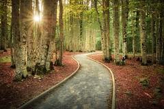 On the way to the lost mount... (Giacomo della Sera) Tags: mount lost bosque camino path red rojo green verde composición s curve curva sol sunny soleado montaña mountain