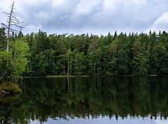 Pentalanjärvi (Antti Tassberg) Tags: luonto landscape pentala metsä reflection kirkkonummi järvi suomi luontopolku finland forest lake nature scandinavia