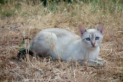Franck-Barske-07884.jpg (franck_barske) Tags: vacances france concepts verspontdugard chat languedocroussillon voyages animal gard