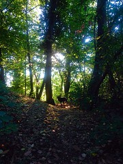 Lights between the trees (MichelaLapo) Tags: rottweiler lights trees summer mountain nature