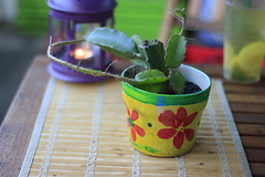 Boho Decor Cactus (blackunigryphon) Tags: cactus decor boho bohochic bohostyle bohodecor bohemian plant balcony balconydecor evening lantern lanterns