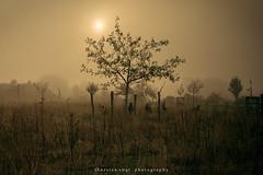 ja hallo ;-) (fotos_by_toddi) Tags: fotosbytoddi voerde niederrhein nrw nordrhein westfalen fog nebel natur nature sonne sony sonya7m3 a7iii a7m3 a7miii alpha7iii alpha7m3 sonyalpha7iii tamron1530 tamron baum bäume tree trees schafe wiese weide