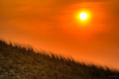 Sunny. (Alex-de-Haas) Tags: 150600mm adobe adobelightroom d500 dutch hdr holland lightroom nederland nederlands netherlands nikond500 noordholland northsea petten photomatix photomatixpro sigma sigma150600mm avond beach beautiful beauty coast duinen dunes evening kust landscape landschaft landschap lente mooi orange oranje prachtig sea spring strand sundown sunset zee zonsondergang