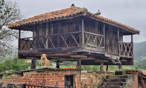 Guard dog on raised granary in Grado, Spain along the Camino Primitivo