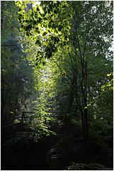 hoegne 15 (beauty of all things) Tags: belgien belgium hohesvenn sart hoëgne leaves light blätter licht intothelight