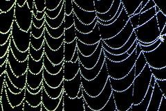 Spider Pearls (NaturalLight) Tags: spiderweb spider web dew dewdrops pearls chisholmcreekpark wichita kansas
