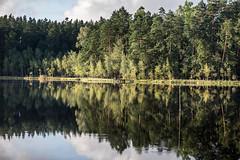 Natural symmetries II (Piotr_PopUp) Tags: seczek sęczek mazury poland polska jezioro jeziora lake laguna reflection trees forest water summer symmetry symetria travel landscape nature