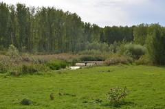 Broekpolder Vlaardingen (Hugo Sluimer) Tags: flora natuur nature natuurfotografie natuurfotograaf natuurinbloei naturephotography broekpolder vlaardingen zuidholland holland nederland