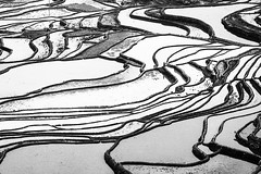 Yuanyang (ronniedankelman) Tags: yuanyangriceterraces yunnan paddyfield riceterraces riceterrace wildchina beautifulchina wonderfulchina photolovers naturelover natureaddict nature beautifulscenery scenery discovertheworld naturephotography travelphotography iliketraveling china chinatravel exploretheworld explorechina bw natgeo nationalgeographic naturephotographer naturephoto enjoythemoment discoverchina