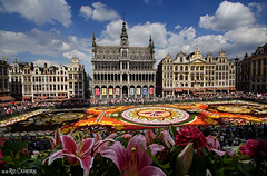 Brussels Flower Carpet (Red Cathedral [FB theRealRedCathedral ]) Tags: redcathedral aztektv sony alpha slt mkii sonyalpha a77ii a77 dslr sonyslta77ii translucentmirrortechnology wanderlust digitalnomad streetart urbanart contemporaryart alittlebitofcommonsenseisagoodthing eventcoverage travellingphotographer travel guanajuato bruxellesmabelle brussels brussel bruxelles clouds grotemarkt lagrandeplace flowercarpet tapisdefleurs bloementapijt lagrandplace roo latinamerican mexico mexican