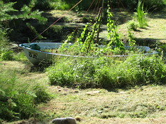 a boat in Botanic Garden on Solovetsky Island (VERUSHKA4) Tags: canon verdure greens greenery plant garden botanicgarden europe northerneurope russia arkhangelskyregion solovetskyarchipelago summer july summertime travel tree decoration metallicobject light day leaf wateringcan