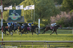 Ahead of the Pack (rumimume) Tags: potd rumimume 2018 niagara ontario canada photo canon 80d twilight evening sunset horse racing thoroughbred forterie racetrack jockey turf outdoor sun summer