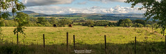 The Campsie Fells from Gartur (Rob Sutherland) Tags: stirling scotland port mentieth stirlingshire campsie fell dykehead flandersmoss field cattle agriculture farm farming agricultural cows fence rural scottish trees farmland uk