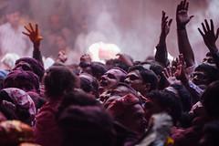 Praying in Shri Banke Bihari Mandir (AdamCohn) Tags: abeer adamcohn bankebiharimandir hindu india shribankeybiharimandir vrindavan gulal holi pilgrim pilgrimage अबीर गुलाल होली
